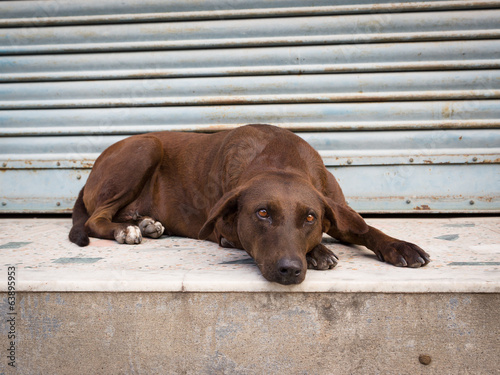 Mournful brown dog rests on step