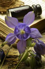 Aquilegia vulgaris Granny's nightcap Водосбор обыкновенный