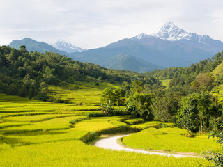 Rice Fields and Macchapuchchhare in the Annapurna Himalaya