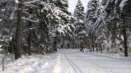Ski track in winter forest