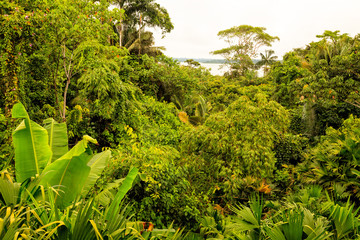 Flora of the the Amazonian  jungle