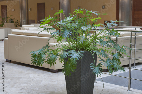 indoor decorative plant
