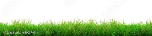 gorgeous green grass summer isolated on white background - 63903701