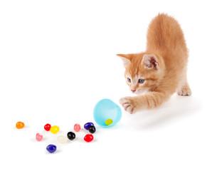 Cute Orange Kitten spilling jelly beans out of an Easter egg