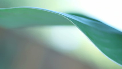 leaf edge closeup