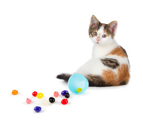 Cute calico kitten sitting next to spilled jelly beans on a whit