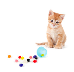 Cute orange kitten sitting next to spilled jelly beans