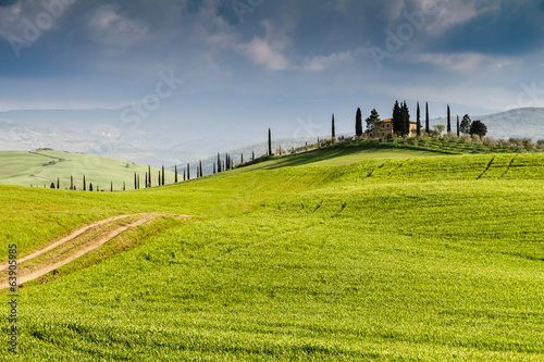 Hill and Cypress in Crete Senesi Tuscany