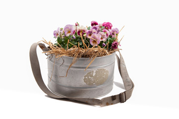 Zinc galvanized basket with pansies