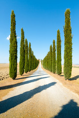 country road flanked with cypresses ascending a hill