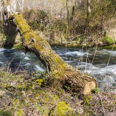 River overpass