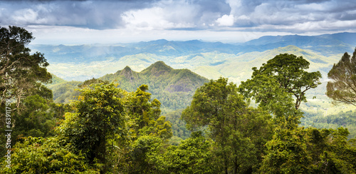 Queensland Rainforest