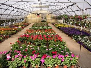 Serra con piante e fiori