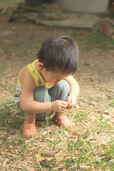 toddler explore garden then he found and examining teak seed