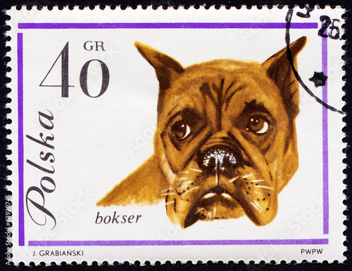 Dog on Polish postmark