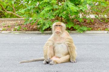 Monkey sitting on the street n Thailand