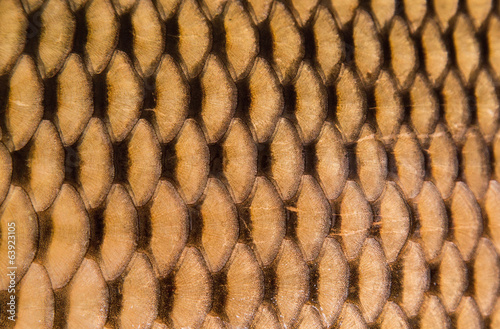 Texture of wild carp skin
