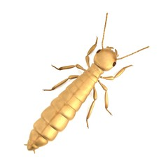 realistic 3d render of termite de-alate