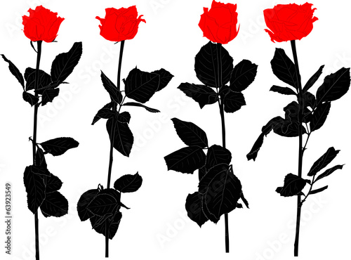 four red and black rose flowers isolated on white