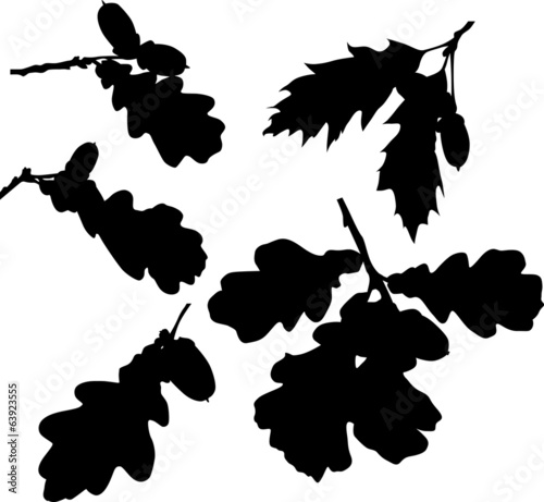 set of oak leaves silhouettes isolated on white