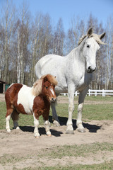 Big horse with pony friend