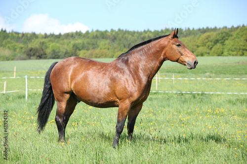 Beautiful horse standing on pasturage