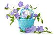 Blue basket with beautiful flowers periwinkle on a white backgro