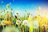 Spring field with flowers, dandelions in fresh grass - 63926353