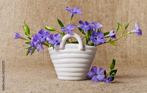 White basket with beautiful blue periwinkle