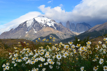 White daisy and blue massif, Torres del Paine