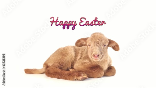 Happy Easter baby lamb gave kiss isolated on white background