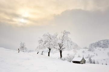 beautiful winter landscape