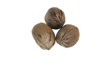 Three Newly Harvested Mottled Brown Pecan Nuts