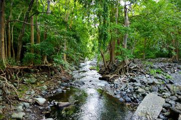 Tropical jungles of Mauritius island