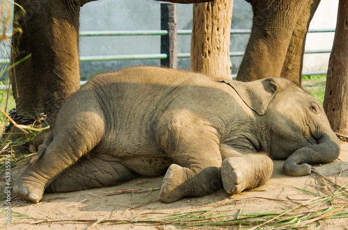 Elephant Breeding Centre in Chitwan, Nepal
