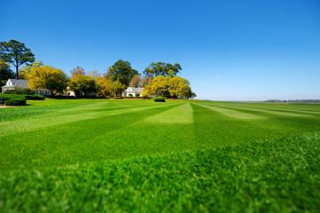 Perfectly striped freshly mowed garden lawn