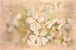 postcard of spring bloom, vintage effect