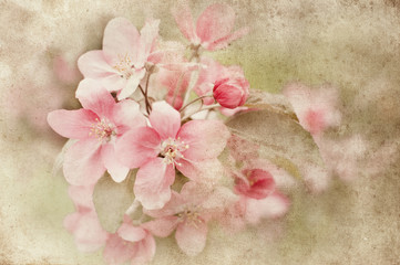 apple blossom over grunge background