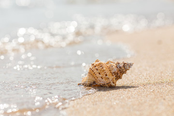 Shell on a sandy beach.