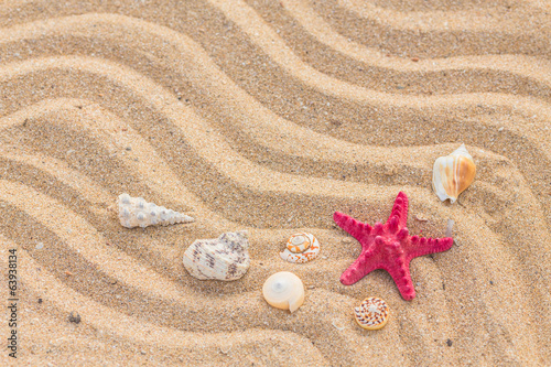 Starfish and wave on the sandy beach