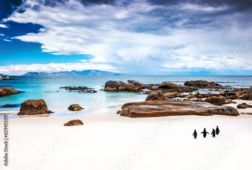 Papiers peints Pingouin Wild South African penguins