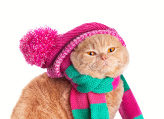 Cat wearing a scarf and hat