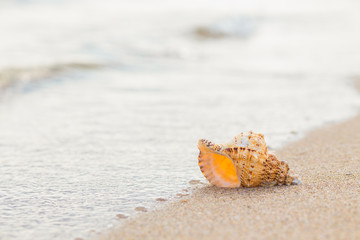 Shell on a sandy beach.