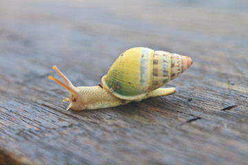 snail on the wood table