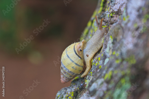 snail on the trunk tree