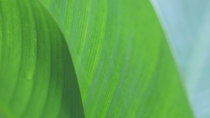 two tropical leaves closeup