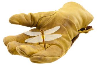 libellule sur gant de cuir