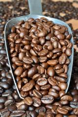 Arabica Coffee beans medium roasted in a scoop