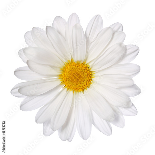 Foto op Canvas Madeliefjes Chamomile flower isolated on white. Daisy. Macro
