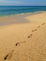 Footprints on the tropical sandy beach